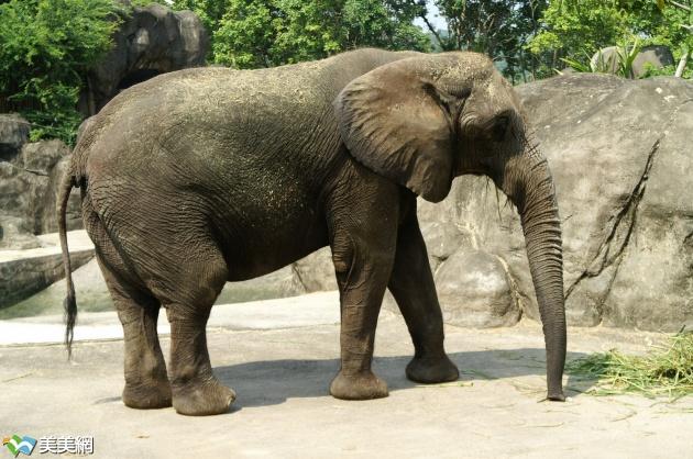 动物园里的那个动物鼻子最长