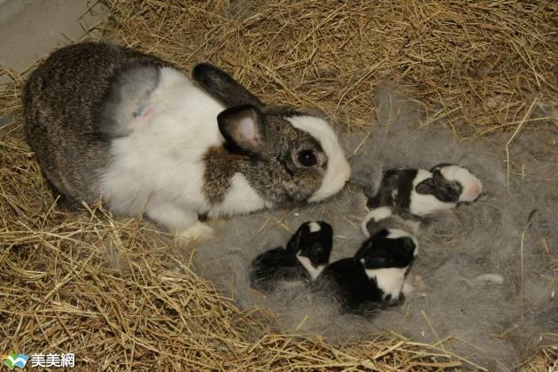 动物保母讲古--5月推出动物的繁殖与育幼