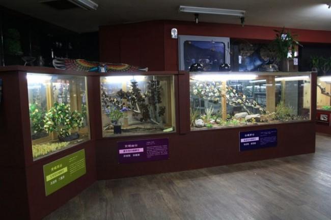 上海昆虫博物馆_安卓壁纸